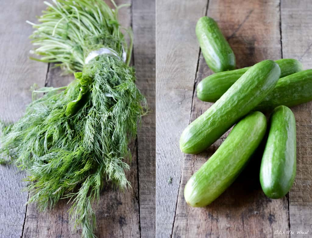 Fermented Dill Pickles | Ditch The Wheat